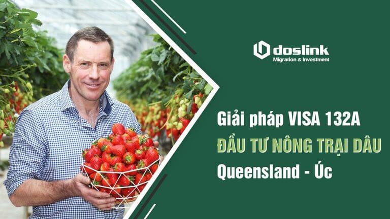 Giải pháp Visa 132A - Đầu tư nông trại dâu Queensland - Úc